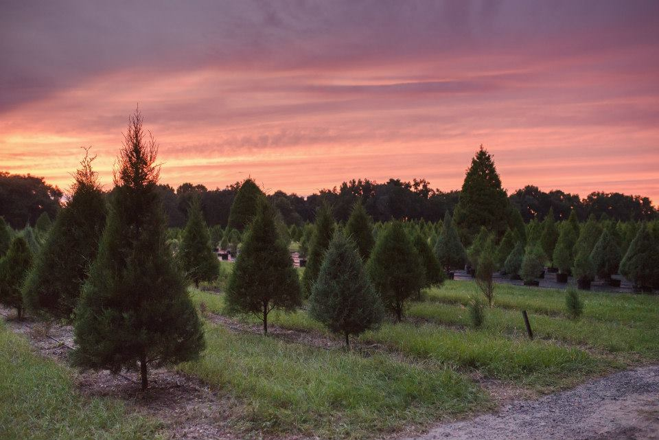 Santa's Christmas Tree Farm Is Officially Open! - Real ...