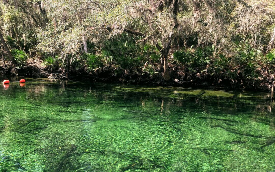 Out & About: Blue Spring State Park
