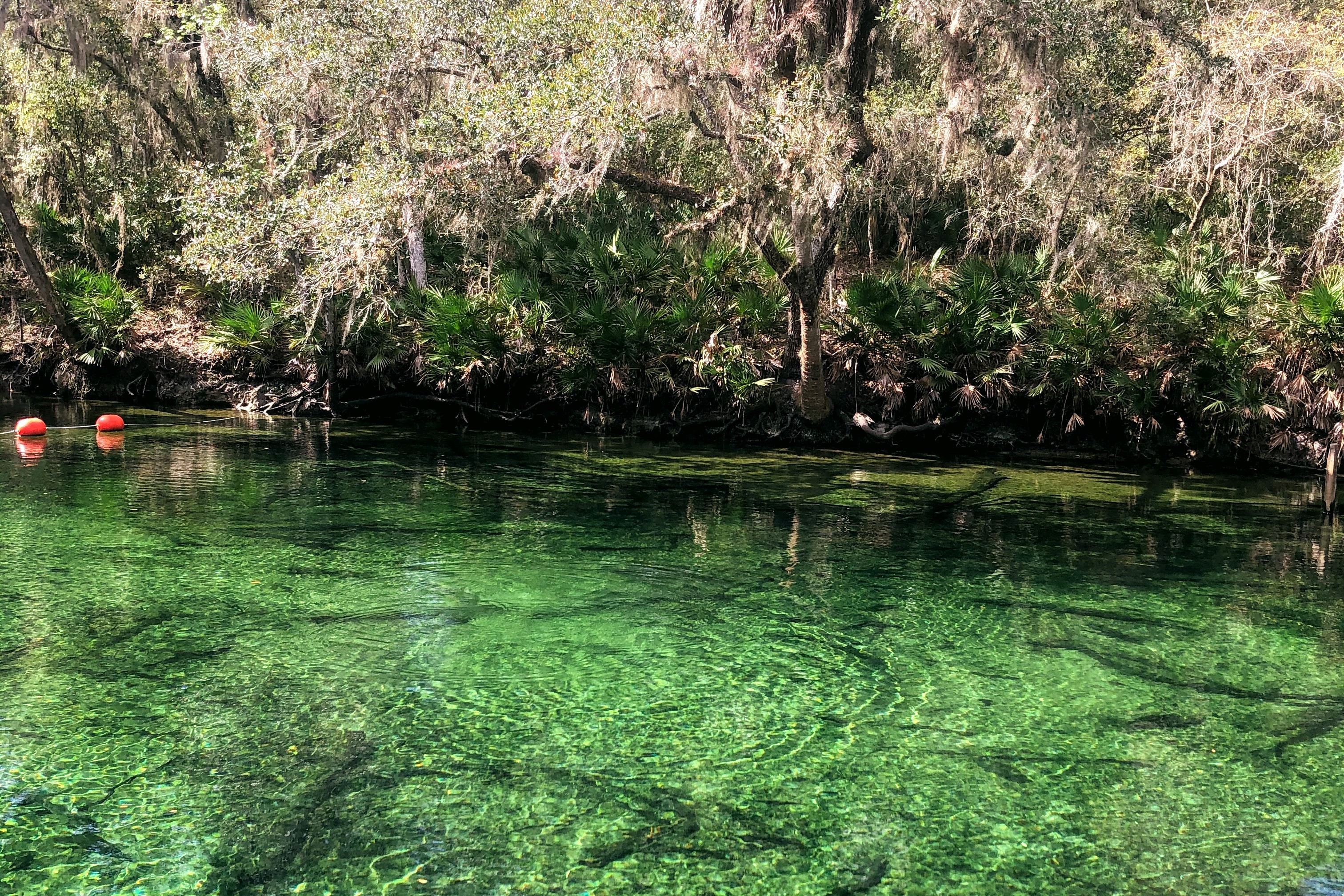 View of Blue Springs State Park
