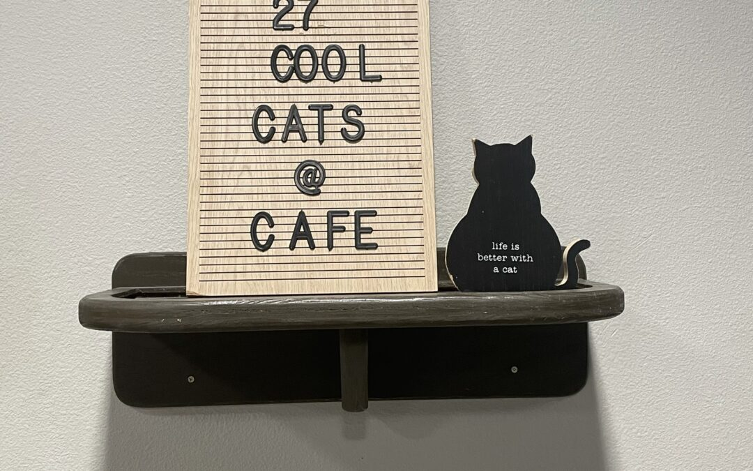 Orlando Cat Cafe: The Purrfect Coffee Spot